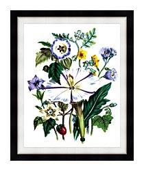 Jane Loudon Flower Art Print canvas with modern black frame