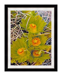 U S Fish And Wildlife Service Barrel Cactus canvas with modern black frame
