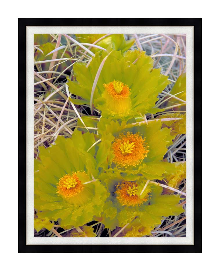 U S Fish and Wildlife Service Barrel Cactus with Modern Black Frame