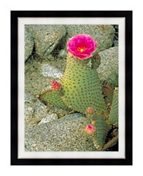 U S Fish And Wildlife Service Beavertail Cactus canvas with modern black frame