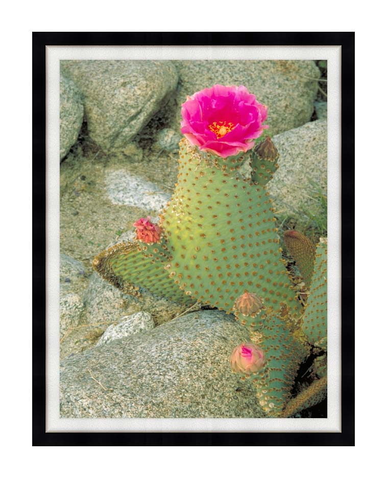 U S Fish and Wildlife Service Beavertail Cactus with Modern Black Frame