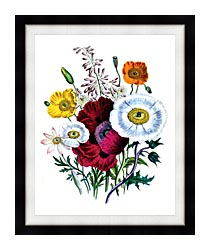 Jane Loudon Poppies Botanical canvas with modern black frame