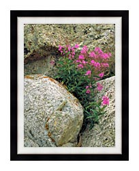 U S Fish And Wildlife Service Fireweed canvas with modern black frame