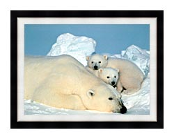 U S Fish And Wildlife Service Polar Bear With Cubs canvas with modern black frame