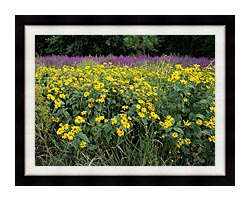 U S Fish And Wildlife Service Invasive Purple Loosestrife canvas with modern black frame