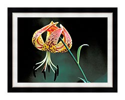 U S Fish And Wildlife Service Nodding Spotted Red Trillium canvas with modern black frame