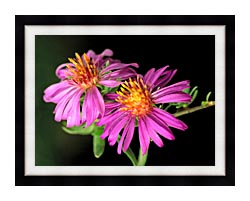 U S Fish And Wildlife Service Silky Aster canvas with modern black frame
