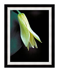 U S Fish And Wildlife Service Small Flowered Bellwort canvas with modern black frame