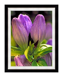 U S Fish And Wildlife Service Soapwort Gentian canvas with modern black frame