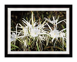 U S Fish And Wildlife Service Spider Lily canvas with modern black frame
