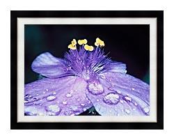 U S Fish And Wildlife Service Spider Wort Flower Art canvas with modern black frame