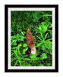 U S Fish And Wildlife Service Sponge Mushroom canvas with modern black frame