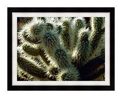 U S Fish And Wildlife Service Teddy Bear Cholla Cactus canvas with modern black frame