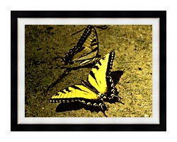 U S Fish And Wildlife Service Tiger Swallowtail Butterfly canvas with modern black frame