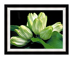 U S Fish And Wildlife Service White Gentian canvas with modern black frame