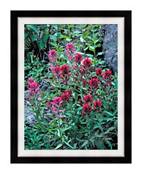 U S Fish And Wildlife Service Wyoming Paintbrush canvas with modern black frame