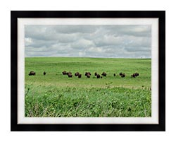 U S Fish And Wildlife Service Bison On The Range canvas with modern black frame