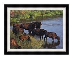U S Fish And Wildlife Service Wild Bison canvas with modern black frame
