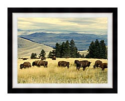 U S Fish And Wildlife Service Bison Herd canvas with modern black frame