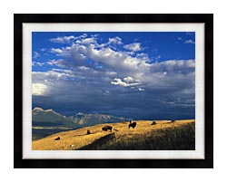 U S Fish And Wildlife Service Buffalo On The Range canvas with modern black frame