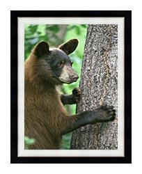 U S Fish And Wildlife Service American Black Bear canvas with modern black frame