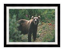 U S Fish And Wildlife Service Kodiak Bear canvas with modern black frame