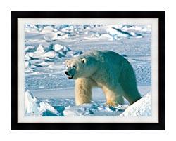 U S Fish And Wildlife Service Artic Polar Bear canvas with modern black frame