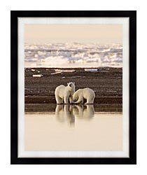 U S Fish And Wildlife Service Polar Bears canvas with modern black frame