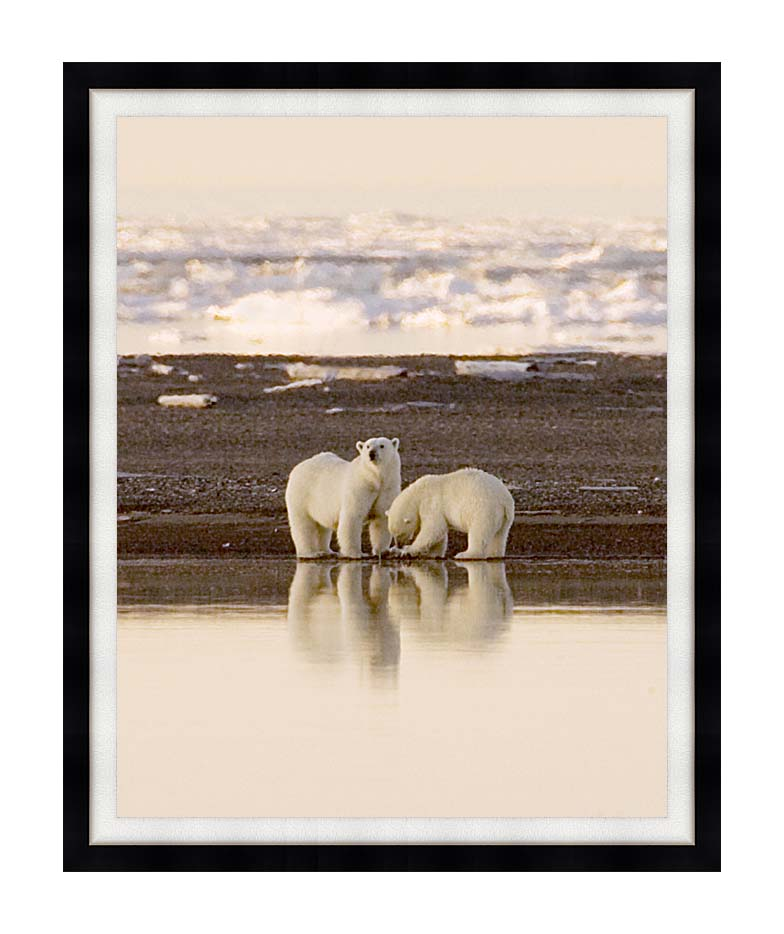 U S Fish and Wildlife Service Polar Bears with Modern Black Frame