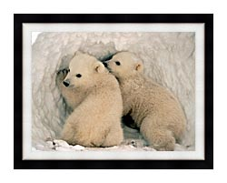 U S Fish And Wildlife Service Polar Bear Cubs canvas with modern black frame