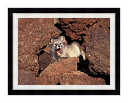 U S Fish And Wildlife Service Arctic Fox canvas with modern black frame