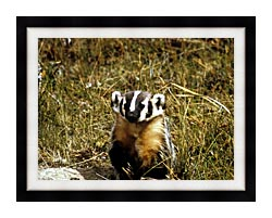 U S Fish And Wildlife Service Badger canvas with modern black frame