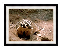 U S Fish And Wildlife Service Badger Art canvas with modern black frame