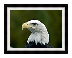 U S Fish And Wildlife Service U S A Bald Eagle canvas with modern black frame