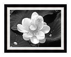 U s fish and wildlife service black and white lotus flower canvas u s fish and wildlife service black and white lotus flower canvas with modern black frame mightylinksfo