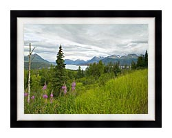 U S Fish And Wildlife Service Hillside With Fireweed canvas with modern black frame