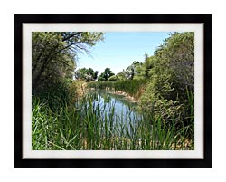 U S Fish And Wildlife Service Corn Creek Springs canvas with modern black frame