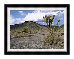 U S Fish And Wildlife Service Joshua Tree In The Desert canvas with modern black frame