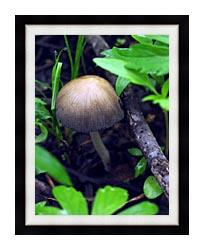 U S Fish And Wildlife Service Mica Cap Mushroom canvas with modern black frame