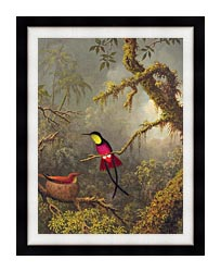 Martin Johnson Heade A Pair Of Nesting Crimson Topaz Hummingbirds canvas with modern black frame
