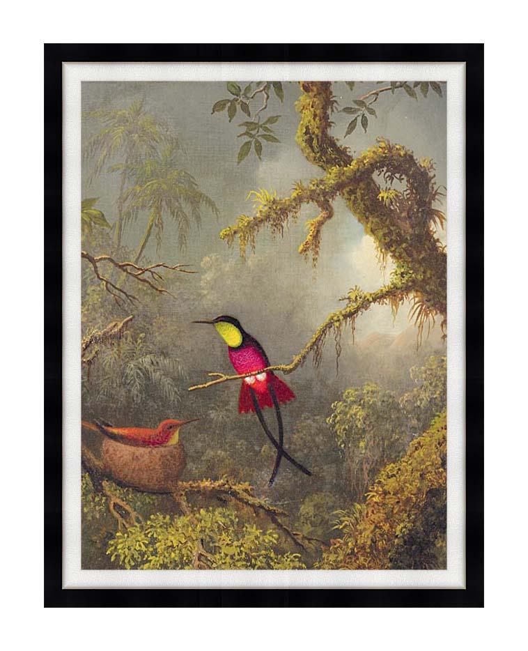 Martin Johnson Heade A Pair of Nesting Crimson Topaz Hummingbirds with Modern Black Frame