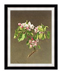 Martin Johnson Heade Apple Blossoms canvas with modern black frame