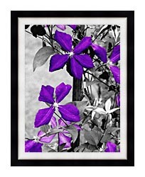 Ray Porter Purple Passion Black And White With Color canvas with modern black frame