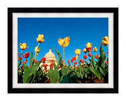 Visions of America Tulips In Spring With U S Capitol Building canvas with modern black frame