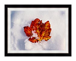 Visions of America Red Maple Leaf In Snow Acadia National Park Maine canvas with modern black frame
