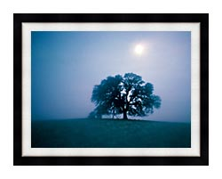 Visions of America Solitary Oak Tree On A Misty Morning California canvas with modern black frame