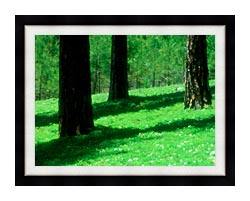 Visions of America Forest Floor At El Dorado National Forest California canvas with modern black frame