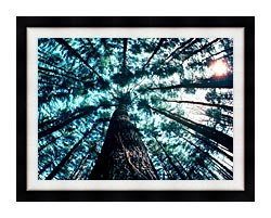 Visions of America Trees In Forest Saratoga New York canvas with modern black frame