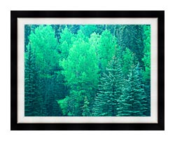 Visions of America Summer In Santa Fe National Forest New Mexico canvas with modern black frame
