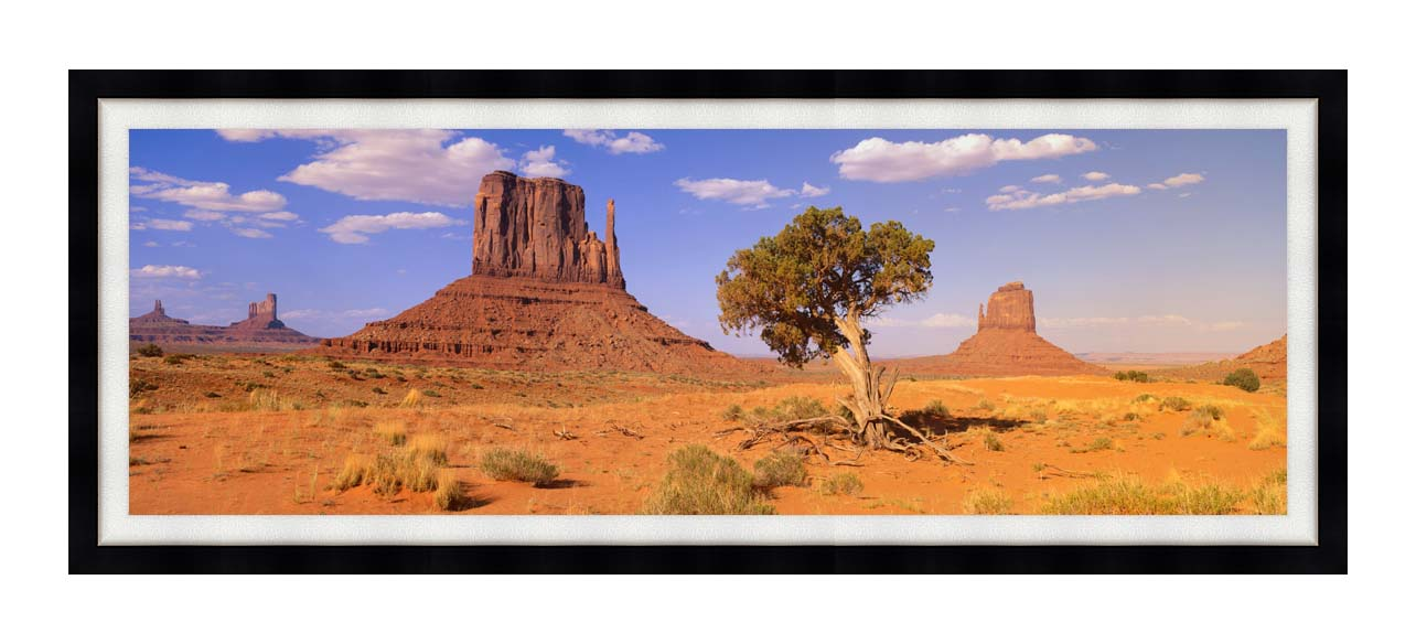 Visions of America The Three Mittens and a Desert Tree with Modern Black Frame